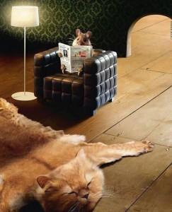 relaxare: soarecele citeste stiri din ziare cu pisica la picioare