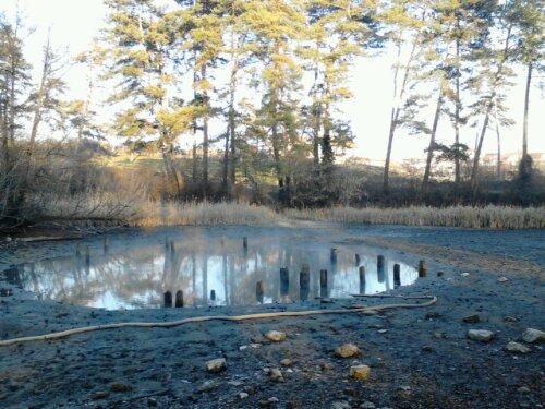 Lacul cu nuferi de la Băile 1 mai, judeţul Bihor, 30 decembrie 2012 #1