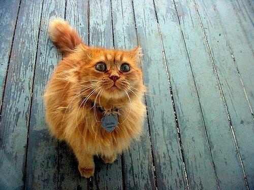 Primul Garfield?